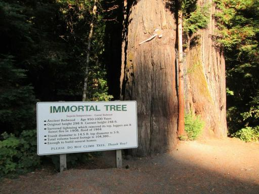 The Immortal Tree in Humboldt National Park